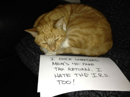 funny-cat-shaming-6
