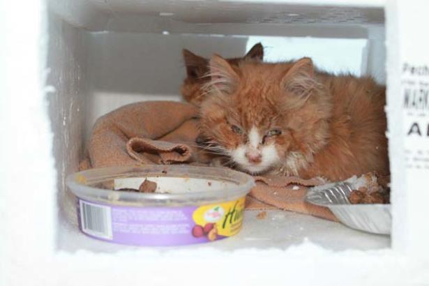Kittens Found In Snow