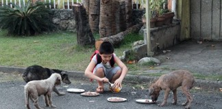 Son Feeds Stray Dogs
