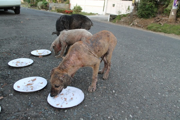 Three Stray Dogs Lick Their plates Clean