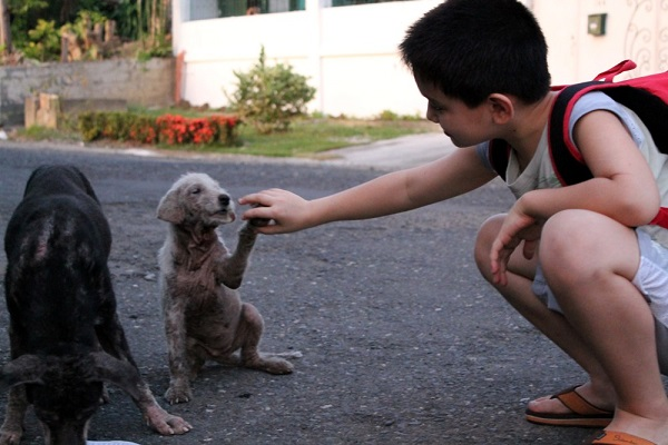 White Puppy High-Fives Boy
