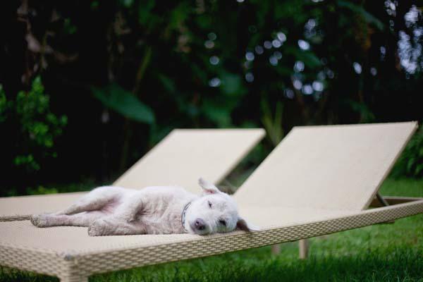 Ruby dog indonesia