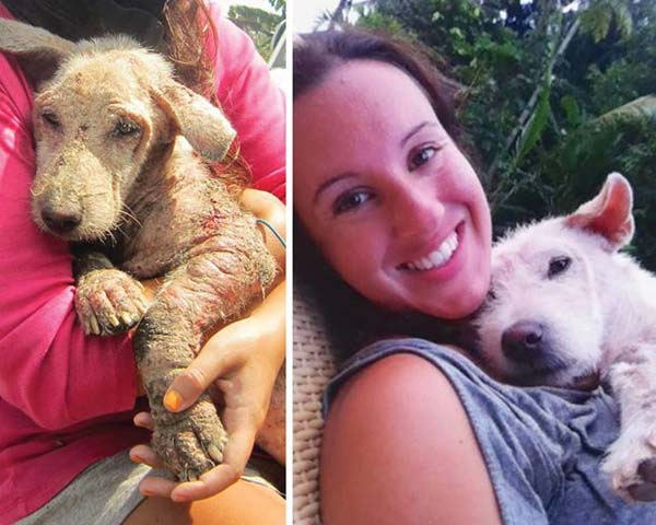 Bali dog adoption