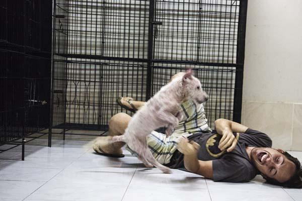 Dog abandoned Bali