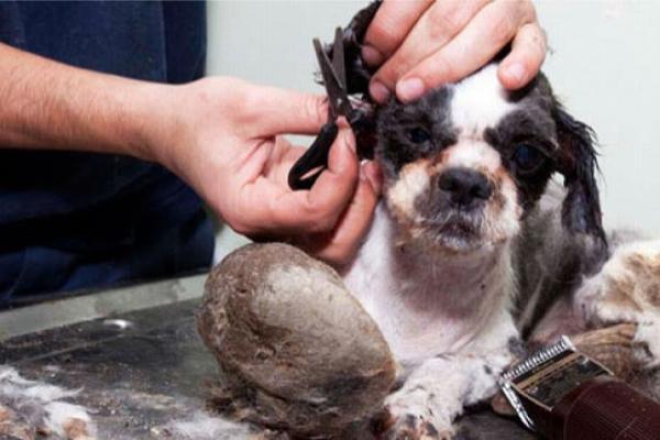 stray_dog_hair_cut