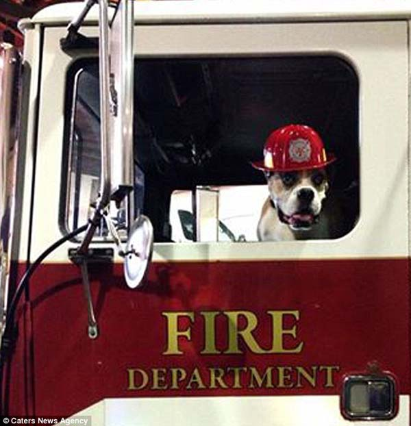 cute dog fire truck