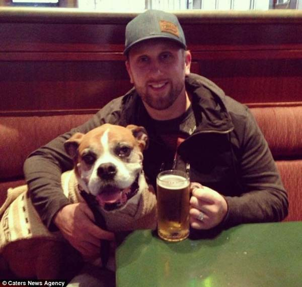 cute dog in bar with beer