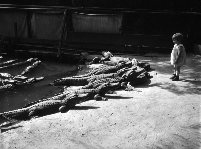 What These Alligators Do Will Shock You But Not In That