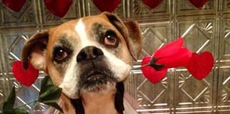 Romeo dog valentine
