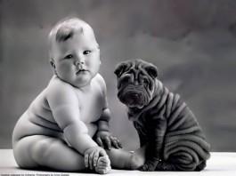 Dog looks like owner