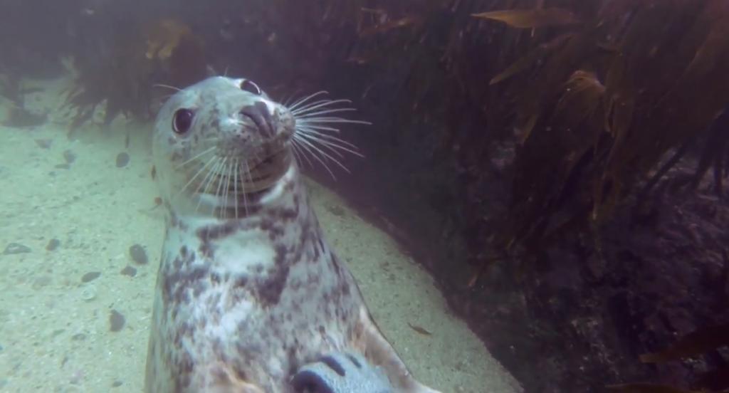 Seal Belly Rub