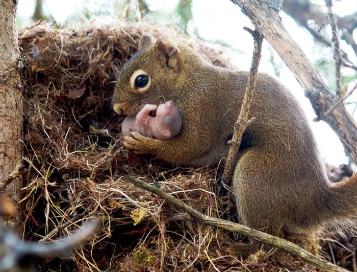Animal Parenting (12)