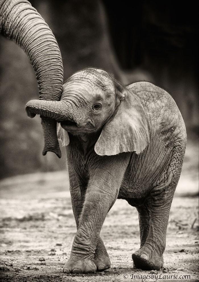 Animal Parenting (13)