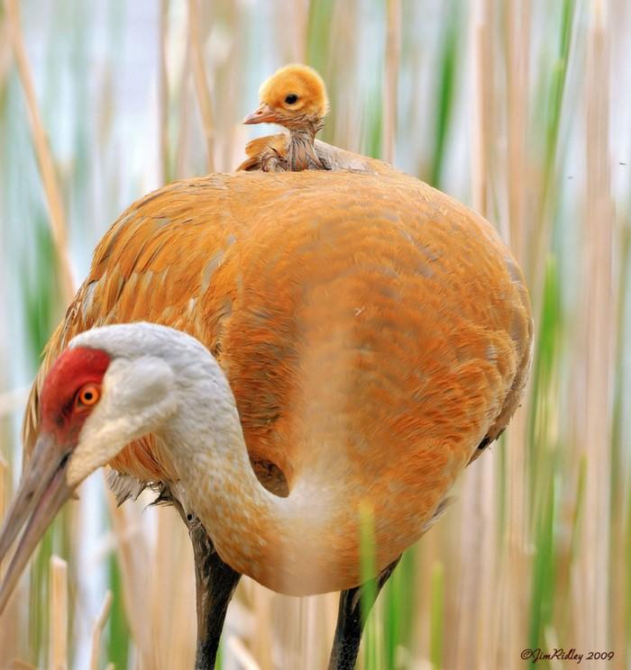 Animal Parenting (16)