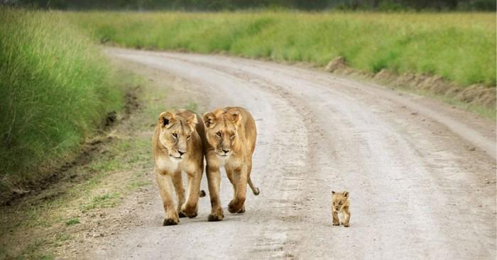 Animal Parenting (17)