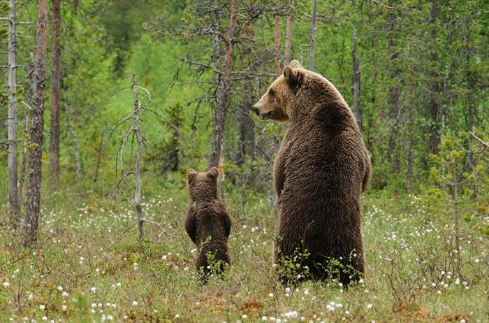 Animal Parenting (23)