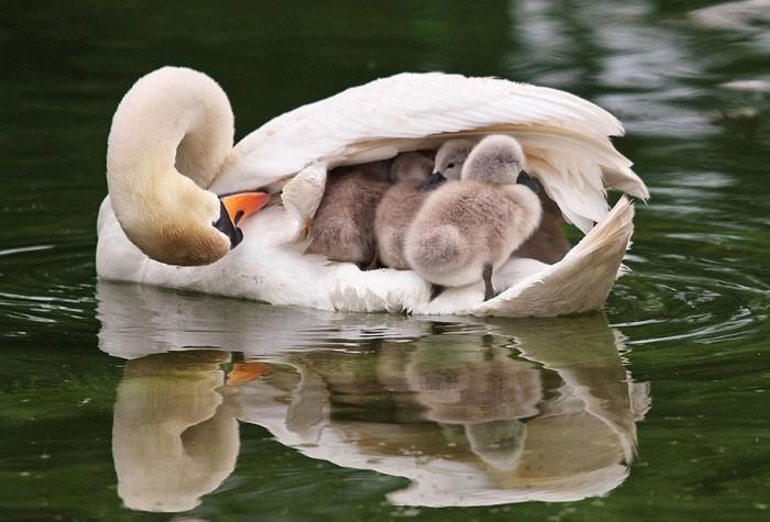 Animal Parenting (3)