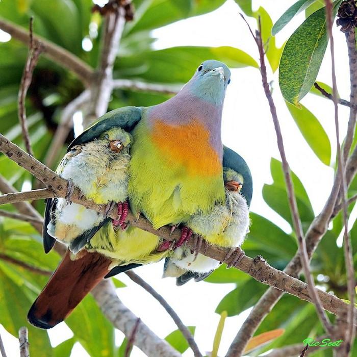 Animal Parenting (6)