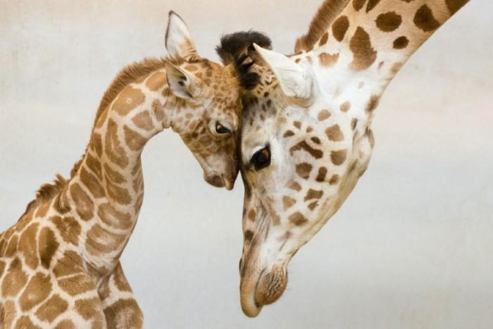 Animal Parenting (7)