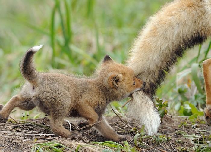 Animal Parenting (8)