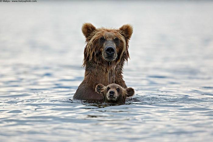 Animal Parenting (9)