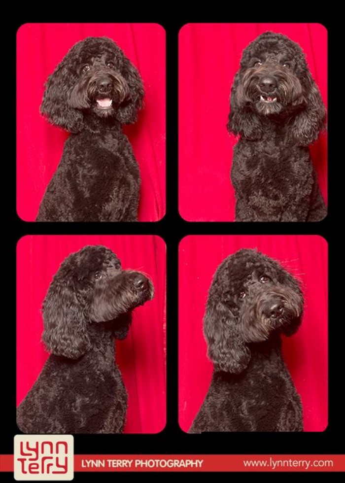 Dogs in Photo Booths (1)