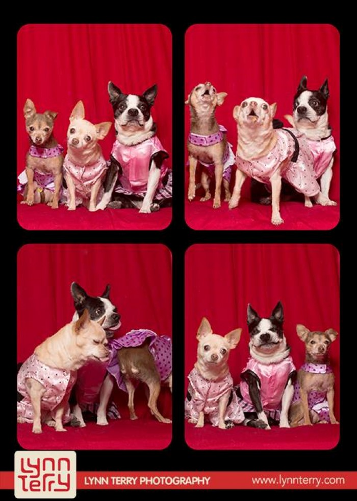 Dogs in Photo Booths (2)
