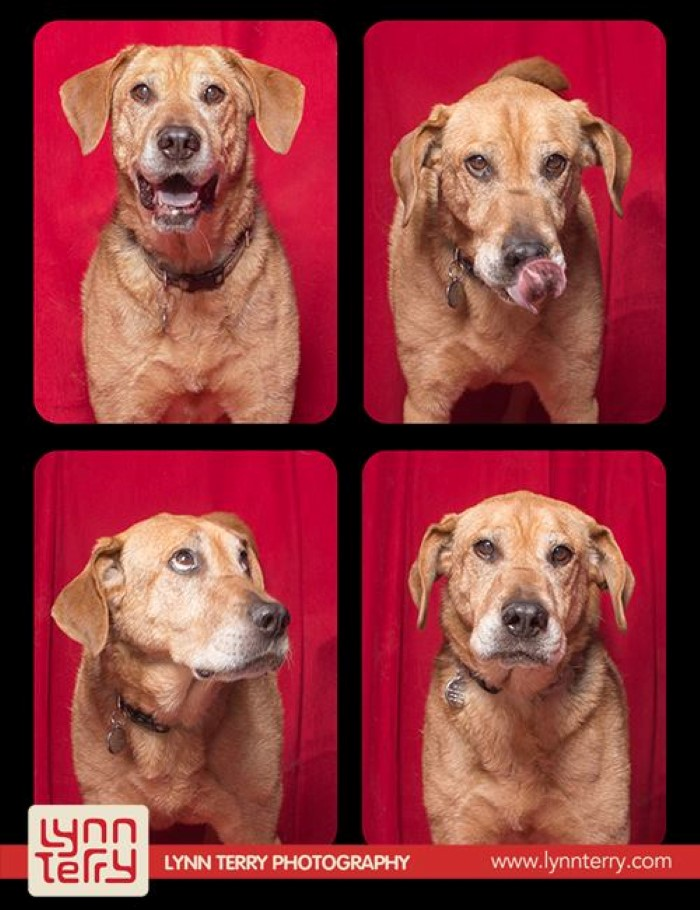 Dogs in Photo Booths (3)