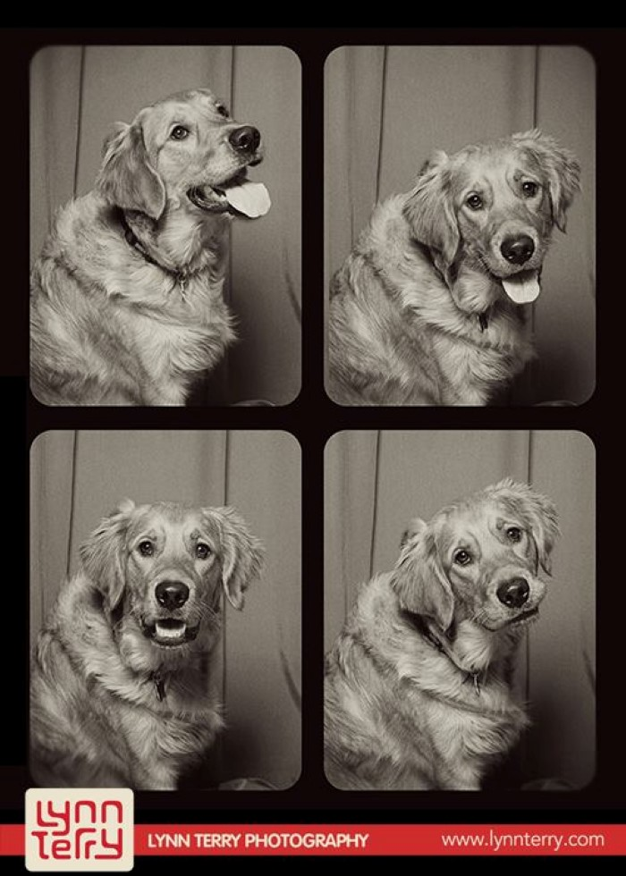 Dogs in Photo Booths (4)