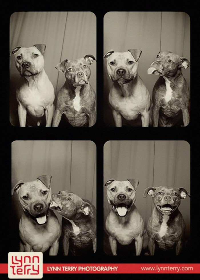 Dogs in Photo Booths (5)
