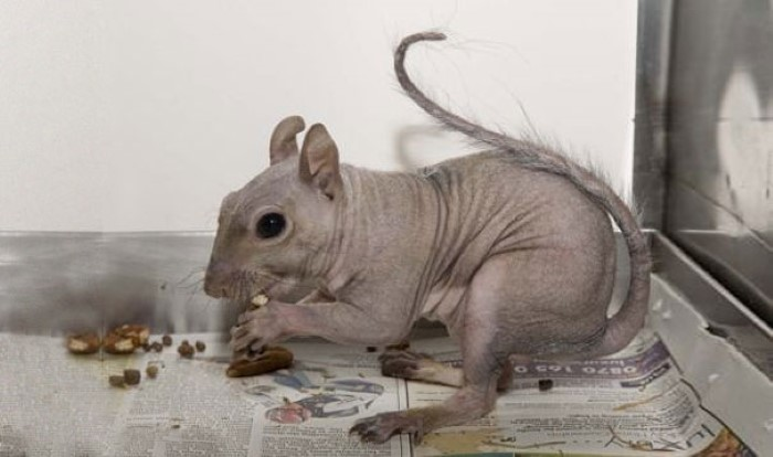 Hairless Animals (13)