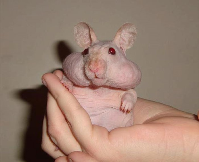 Hairless Animals (14)