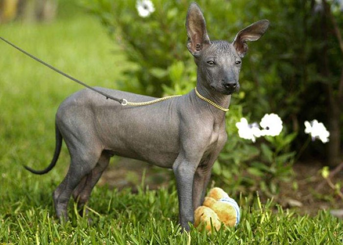 Hairless Animals (15)