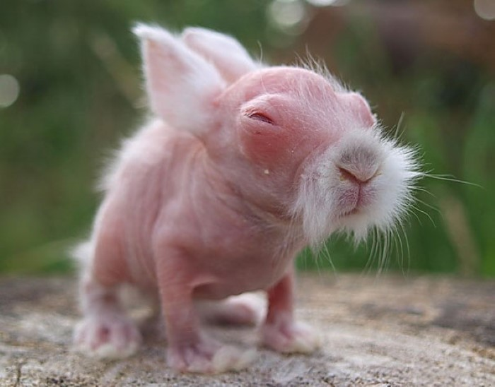 Hairless Animals (2)