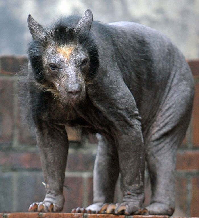 Hairless Animals (4)