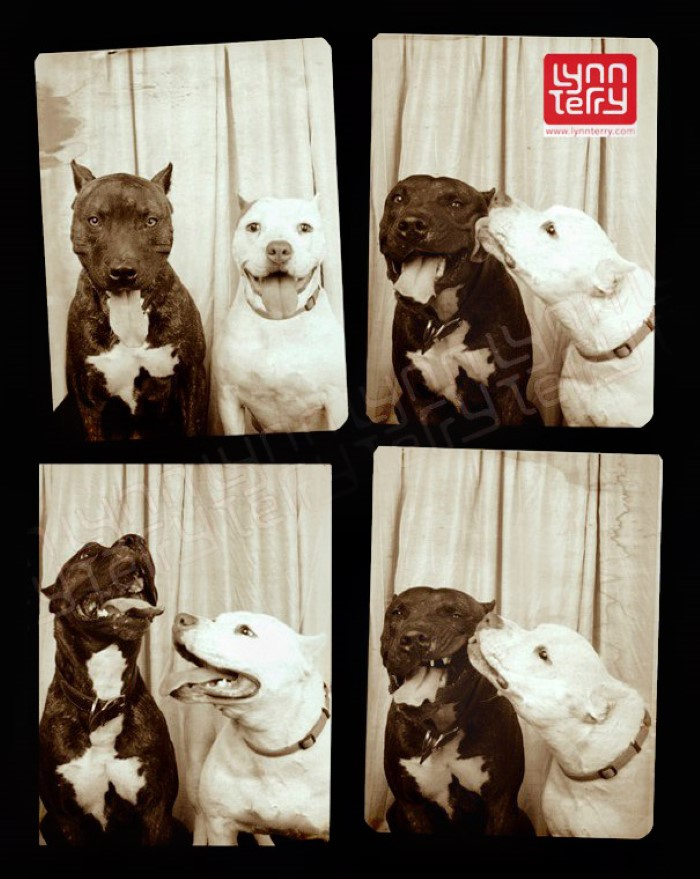 Photo Booth Dogs (2)