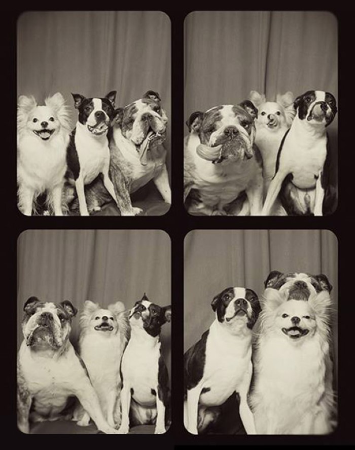 Photo Booth Dogs (3)