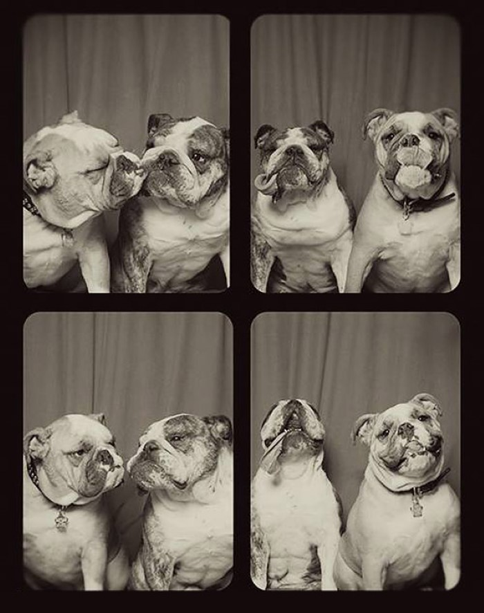 Photo Booth Dogs (4)
