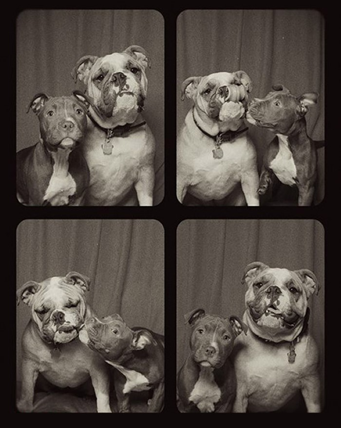 Photo Booth Dogs (6)