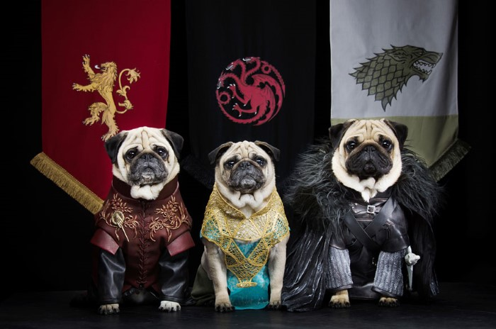 Pugs Game of Thrones (1)
