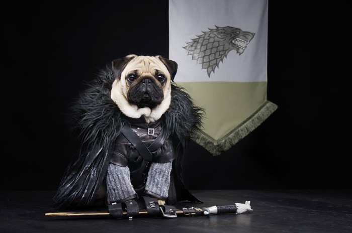 Pugs Game of Thrones (3)