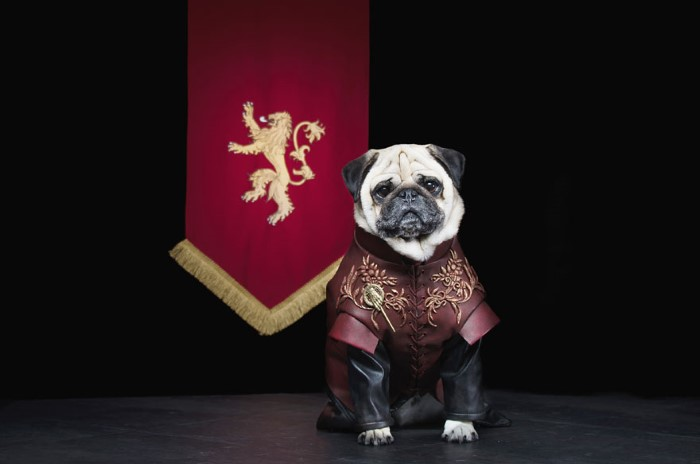 Pugs Game of Thrones (4)