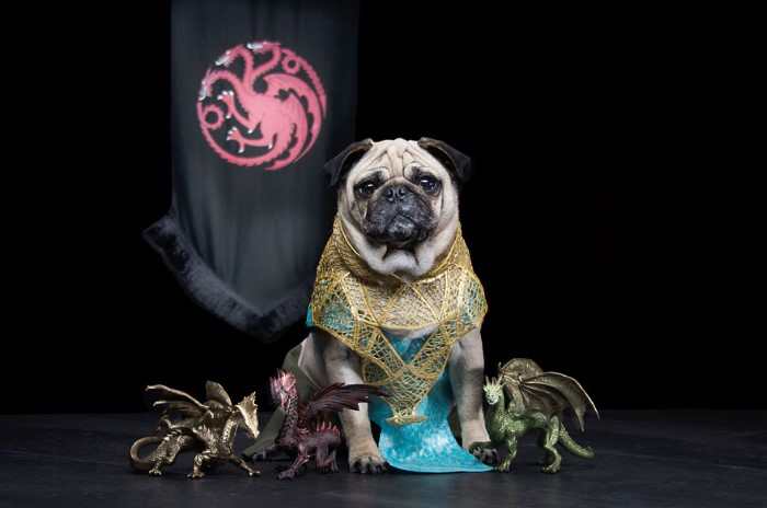 Pugs Game of Thrones (5)