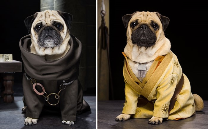 Pugs Game of Thrones (7)