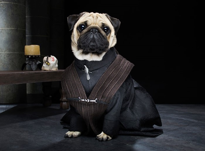 Pugs Game of Thrones (8)