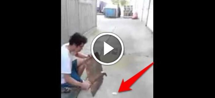Asian boy gets hit by car