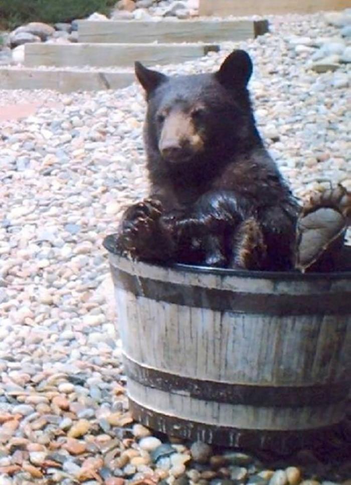 Water Barrel Bear (1)