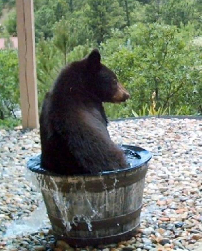 Water Barrel Bear (3)