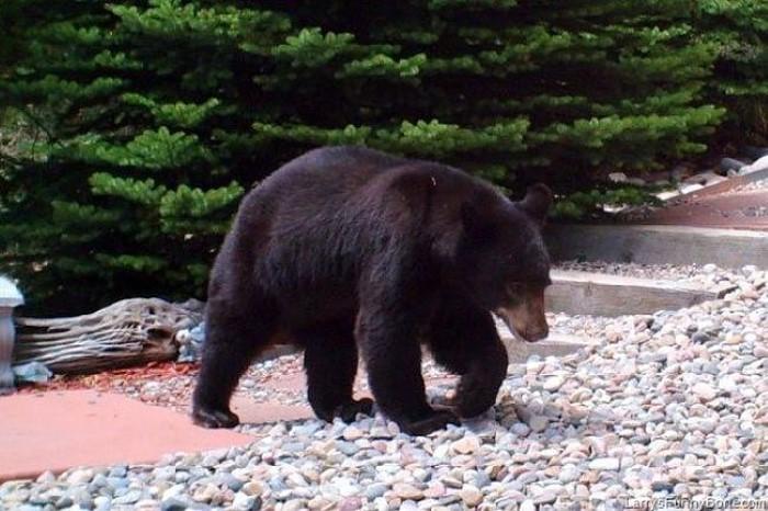 Water Barrel Bear ((4)