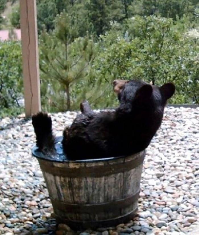 Water Barrel Bear (6)